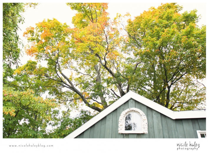 nicole haley photography, leelanau trees in the fall